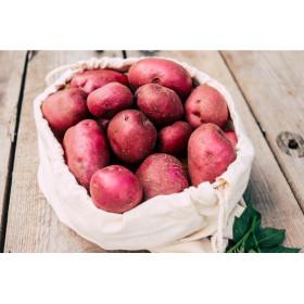 Pomme de terre roseval
